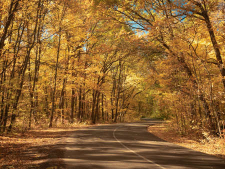 Windy asphalt road in forest. Nature landscape. Autumn forest in October. Trees with yellow leaves make an arch above the road. Fallen leaves on the ground. Blurred background. Selective soft focus Фото со стока