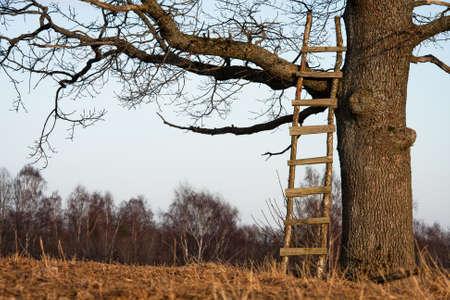 ladders in a oak photo