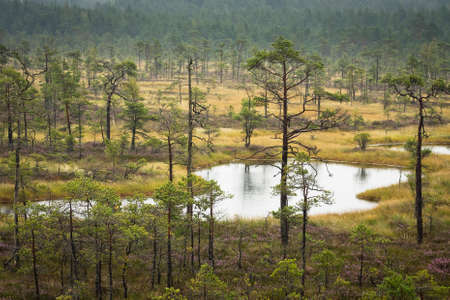 scapes: swamp scapes
