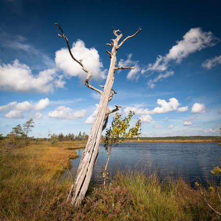marsh landscape with clouds photo