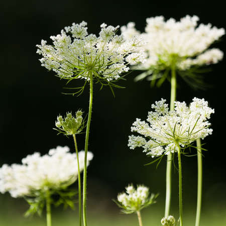 cross procesed: meadow flowers Stock Photo