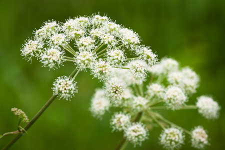 procesed: meadow flowers Stock Photo