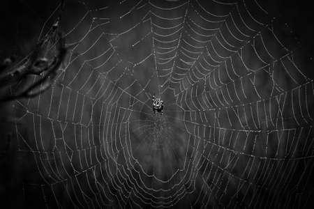 cobwebs: cobwebs