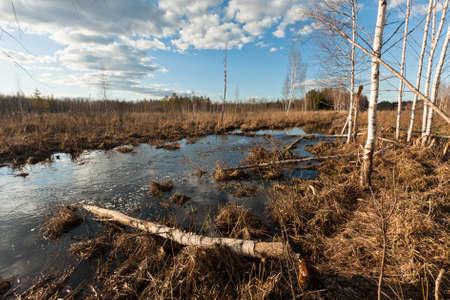 bog: river in bog