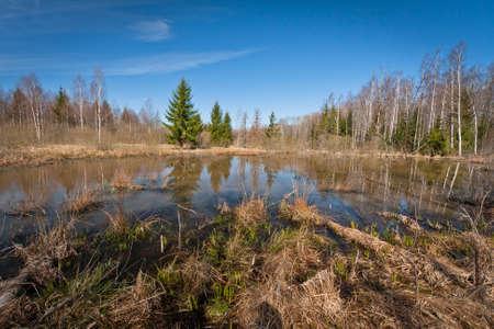 bog: bog lake with  island