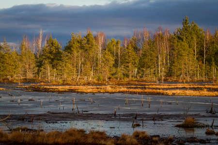 bog: bog lake with reed