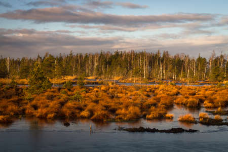 wide  wet: Swamp lake in sunny autumn day