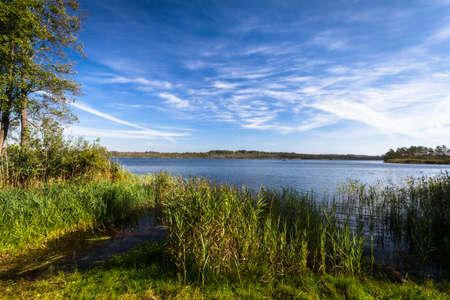 summer at the wild lake