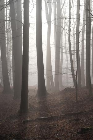 Ochtendmist in het bos