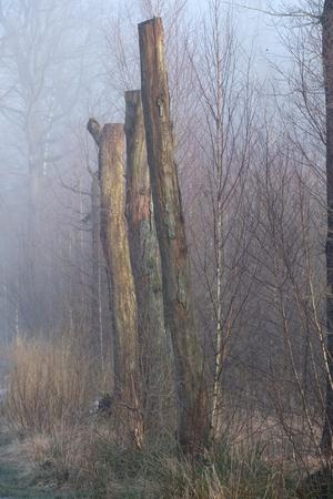 Dode bomen in het bos Stockfoto