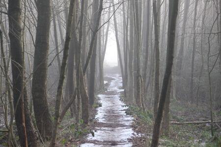 Pad door een bos