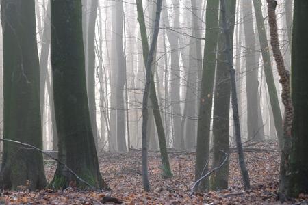 Bos zonder kreupelhout