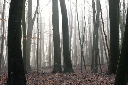 Ochtendstemming in het bos Stockfoto