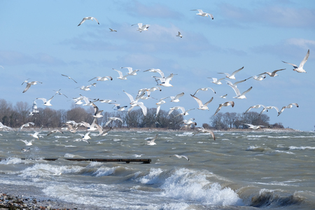 Gulls by the sea Stock Photo
