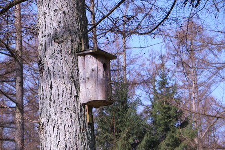 Nesting box in the forest Stock Photo