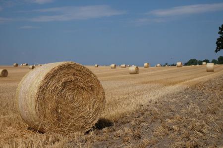 Blue sky over a cornfield