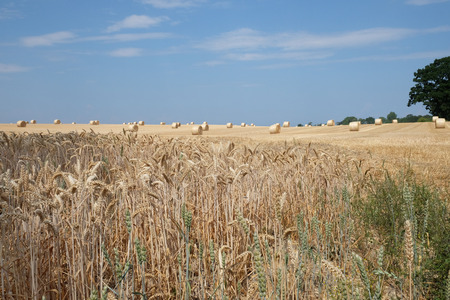Straw harvest on a field