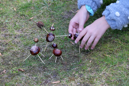 Child is making chestnuts on the ground.