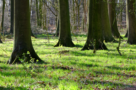 Spring mood in the beech forest Archivio Fotografico