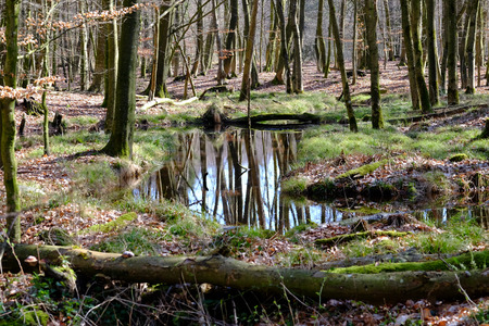 Water biotope on a glade Stock Photo