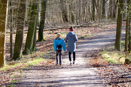 Walkers in the forest