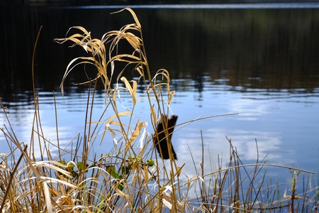 Dry grass on the lake shore