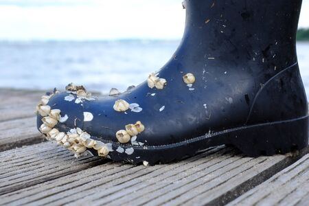 Wellington boots are infested with barnacles Stok Fotoğraf