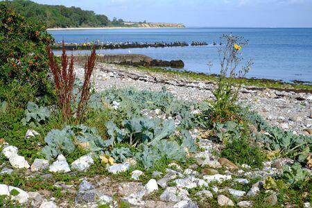 Natural coast on the Baltic Sea Imagens