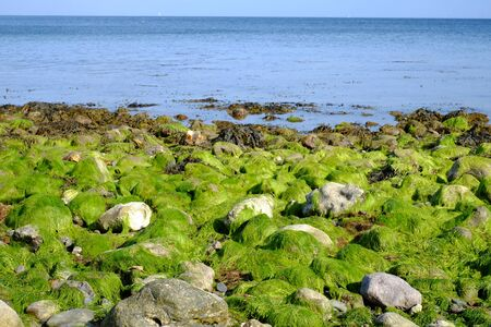 Low water level releases the seagrass