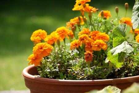 Floral autumnal in the garden Stok Fotoğraf