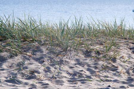 Coastal region with beach grass at the Baltic sea