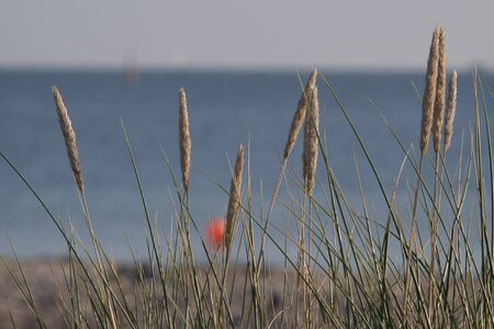 Morning mood on the Baltic Sea beach