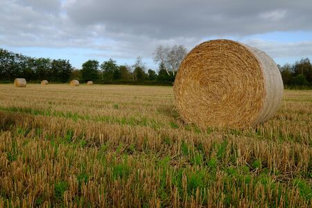 Agricultural grain area with straw bales Stok Fotoğraf