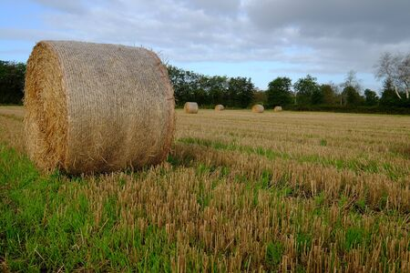 Round bales on the grain field after the harvest