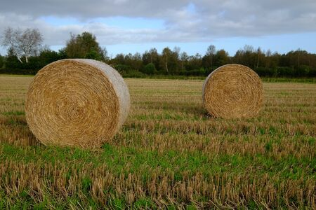 After the harvest straw bales are lying in the field