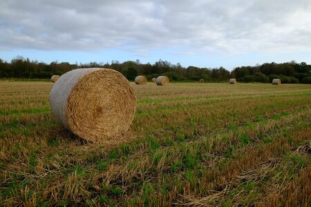 Stubble field with round bales