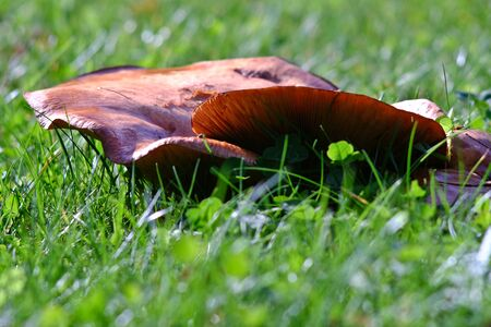 Mushroom in the great outdoors