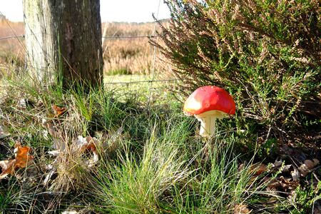 Toadstool stands on the edge of a field