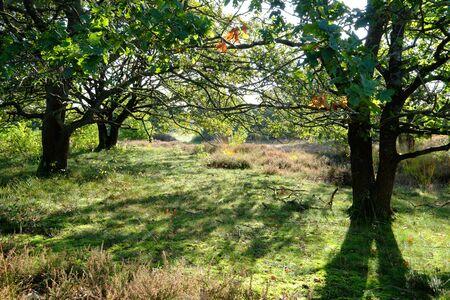 Morning mood under oak trees Stok Fotoğraf