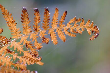 Dryer fern in the autumn light Stok Fotoğraf