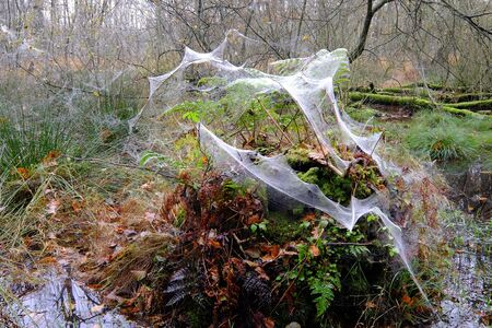 Spider web in the biotope