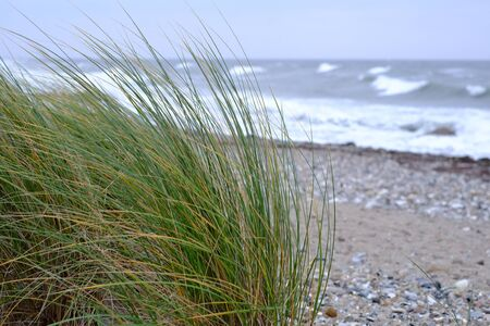 Seagrass and stormy sea on the coast