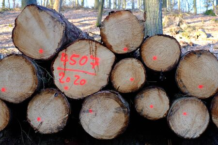 Stacked logs marked for sale
