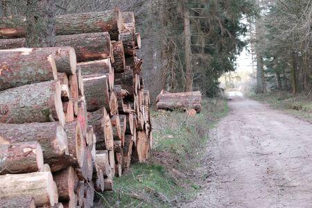 Tree trunks on a forest path Reklamní fotografie