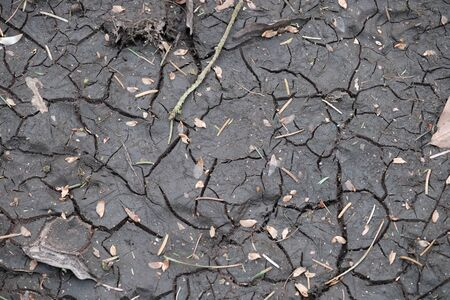 Forest floor dries out and shows cracks Stok Fotoğraf