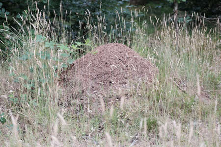 Large anthill by the wayside