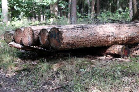 Old tree trunks are waiting for transport Standard-Bild