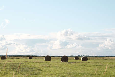 Round bales in a large meadow