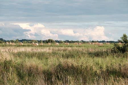 Grass harvest in a flat landscape