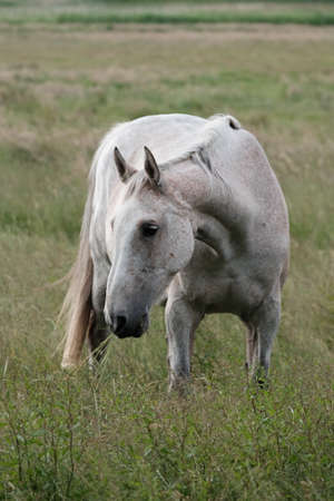 Horses stood on the meadow and eat